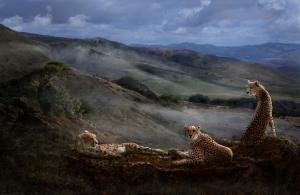 Melinda Hughes-Berland Receives 1st Place, Outstanding Achievement In Wildlife For Cheetah Ridge